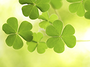 Get outside, and find a four-leaf clover!