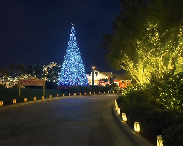 seaworld Christmas Lights
