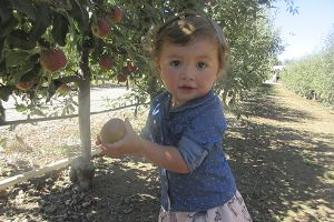 Apple Picking in San Diego
