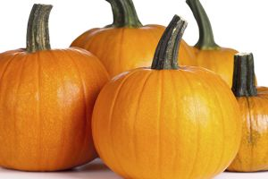 Fun Fall Traditions in San Diego