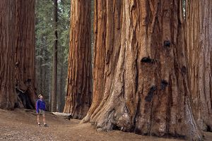 Discover California National Parks