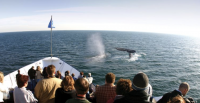 Winter Whale Watching Tours