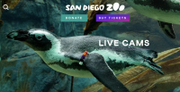 Live Cams at the San Diego Zoo