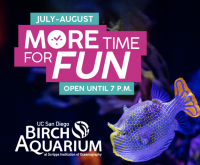 Extended Summer Hours at the Birch Aquarium