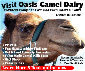 Oasis Camel Dairy ad
