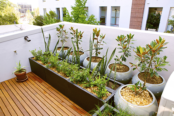 Make a patio garden with your kids.