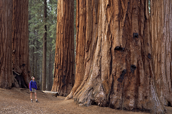 California National Parks are full of awesome wonders.