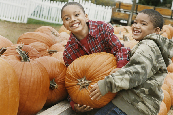 find a pumpkin patch near you sm