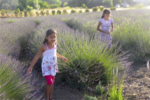 Take a trip 40 miles northeast of San Diego City to Valley Center, and go to Keys Creek Lavender Farm