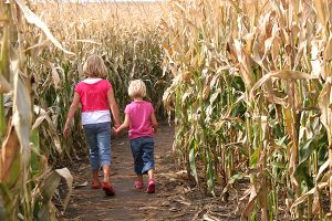 Corn Mazes in San Diego