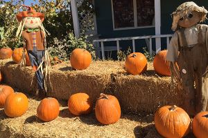 Pumpkin Patches Open in San Diego County 2020
