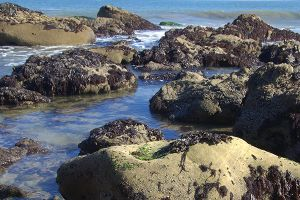 Tide Pools in San Diego